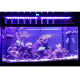 EVERGROW Rampe LED AquaOcean IT5012 - 240 Watts - 1200mm