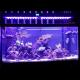 EVERGROW Rampe LED AquaOcean IT5012 - 240 Watts - 1200mm
