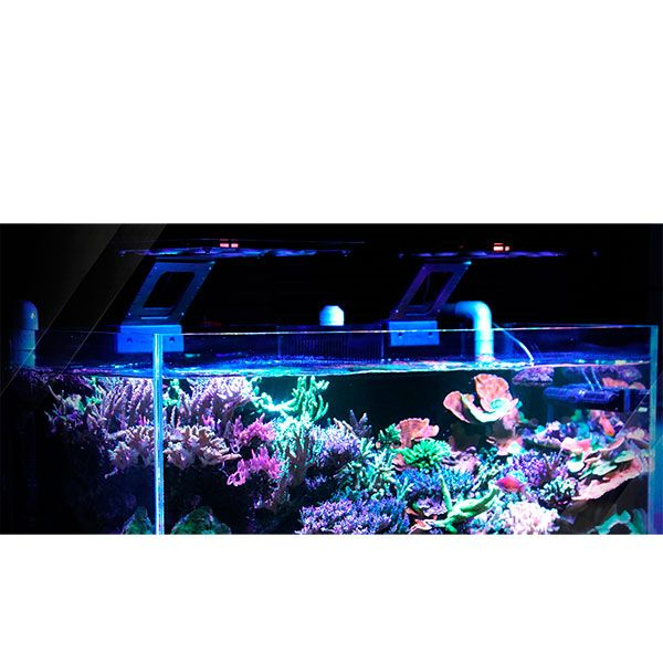 marine cree led aquarium light marine cree led aquarium. Black Bedroom Furniture Sets. Home Design Ideas